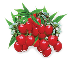 Goji Berry Fruit Image 300pix