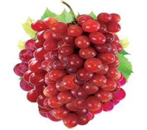 Resveratrol Fruit Image 300pix