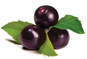 Acai Berry Image