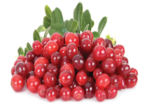 Cranberry Fruit Image 300pix